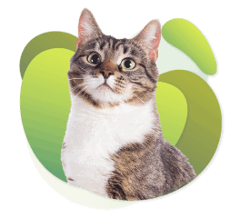 Gager - Cats - Eliminate All Odors