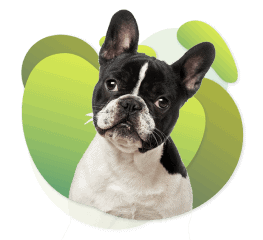 Gagar - Dogs - Eliminate All Odors